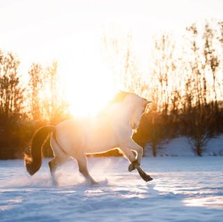 Powder Horses