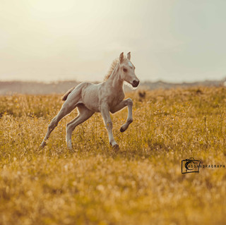 Caya - Foal in Action