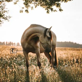Golden Horse Spirit