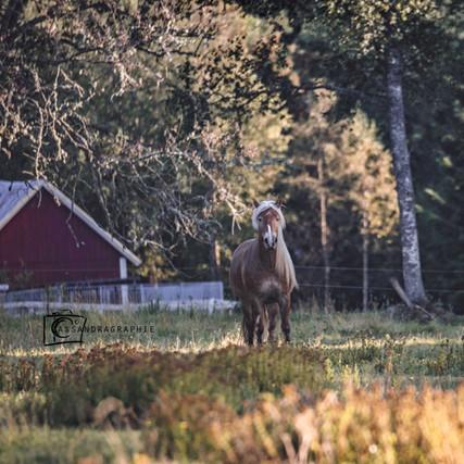 Hera - Sweden