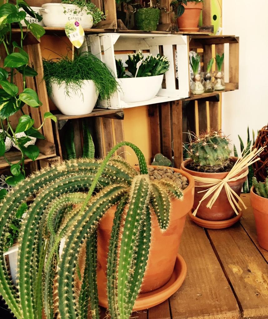 cactus_grupo.jpg