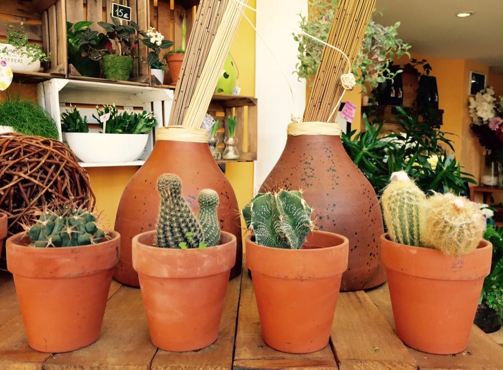 cactus_seleccion.jpg