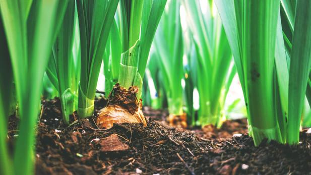 Future Food Systems: Rethinking Urban Land Use