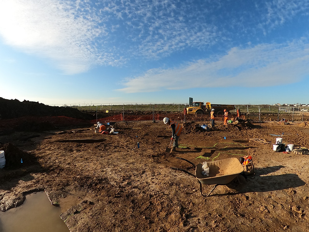 A group of archaeologists in orange PPE and hard hats work in a wet and muddy field. There is a large yellow dumper truck in the background.