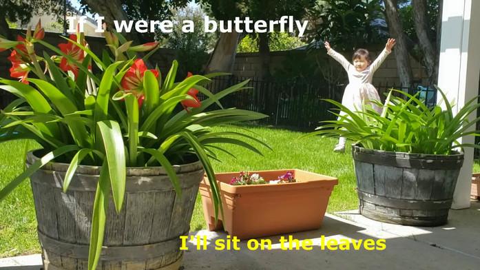 나비.wmv