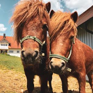 Ponys.jpg