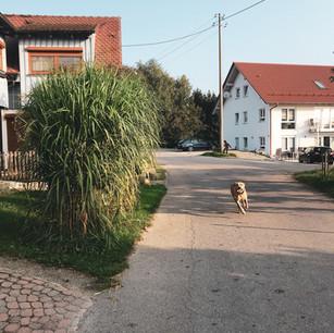 Straße zwischen Ferienhaus mit Sammy.jpg