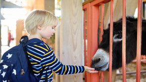Toddler dies from E. coli infection after visit to petting zoo at county fair