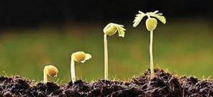 Como manter o solo fértil