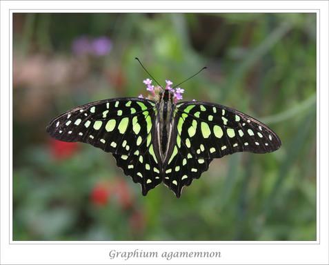 Framed ps IMG_0124 copy2.jpg