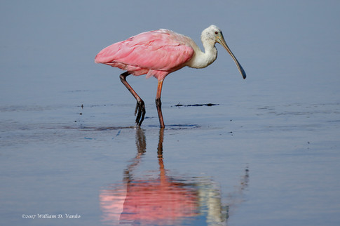 Relections in pink