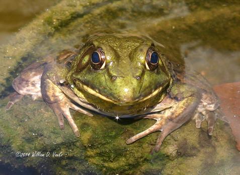 frogface_14461237513_o.jpg