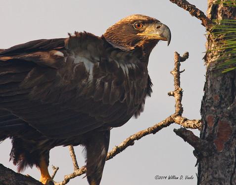 eagle-eye_12155116623_o.jpg