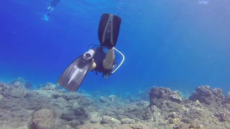 Diving Maui