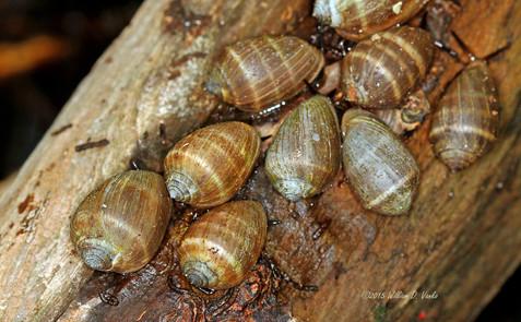 a-snails-pace_22409208685_o.jpg