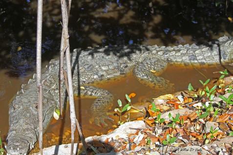big-lizard-little-lizard_22723523357_o.jpg