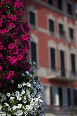 Fresh flowers in Santa Margherita