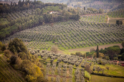 View coming in to San Miniato