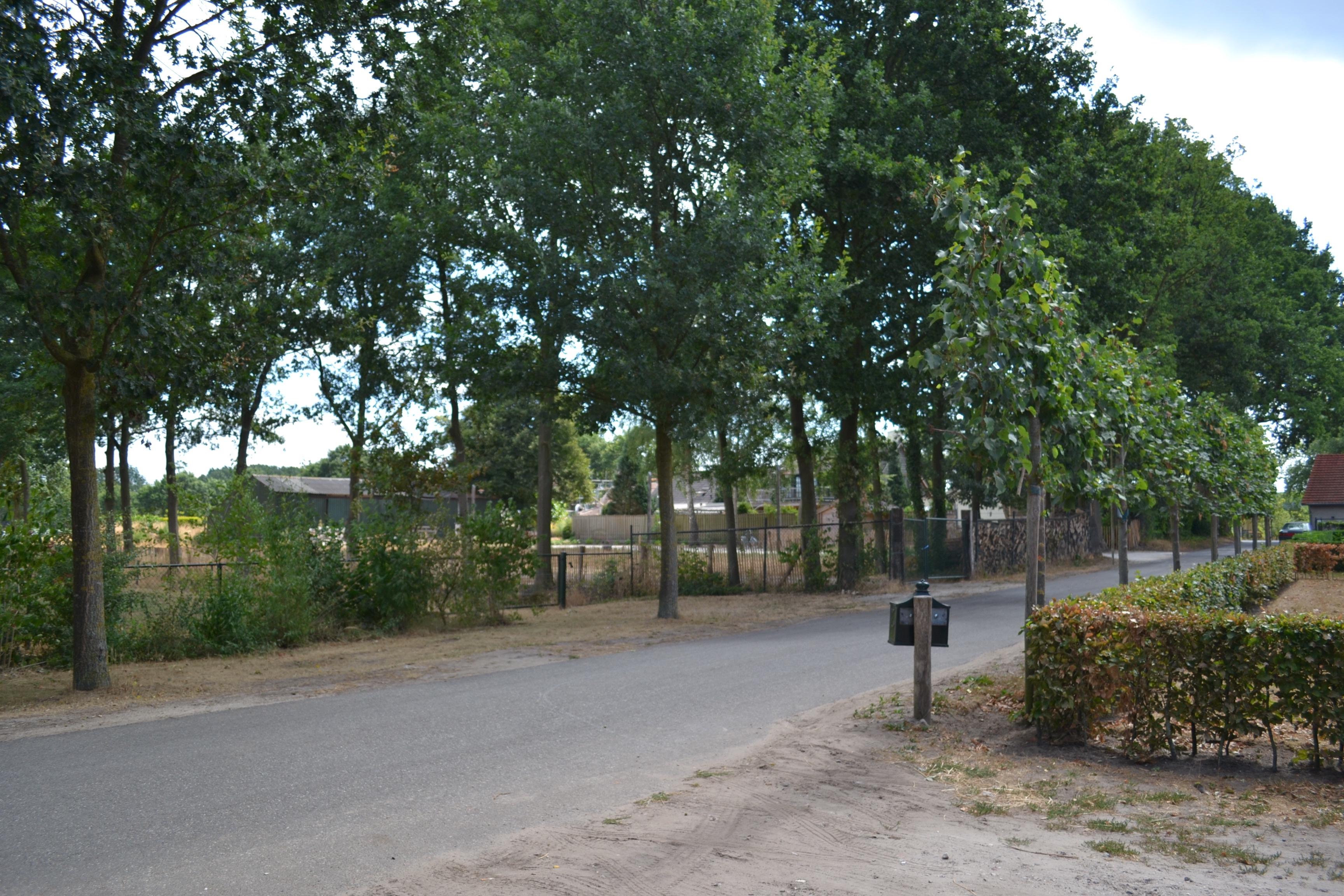 Weg bij Grootenhout 3