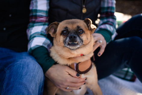 Love & A Dog at a Christmas Tree Farm