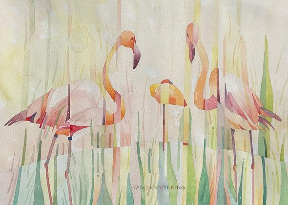 2018_FlamingoFamilie_Aquarel_48x33_WIX.j