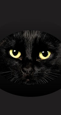 cat-eye X-Dynamic