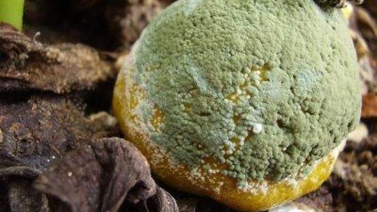 fungos-como-vivem-funcao-na-natureza-e-producao-de-alimentos-1200x675.jpg