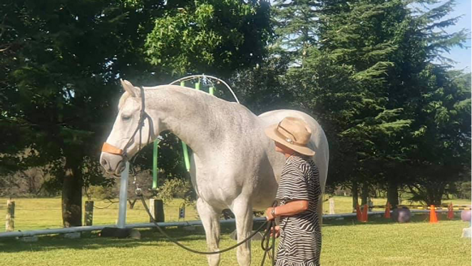 Adam Sutton Allround Horsemanship