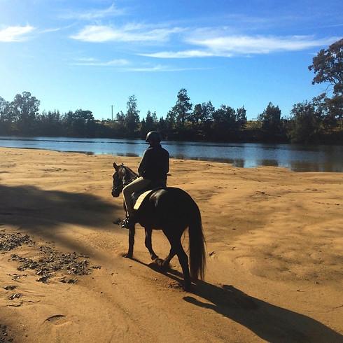 Endurance Horse Ride