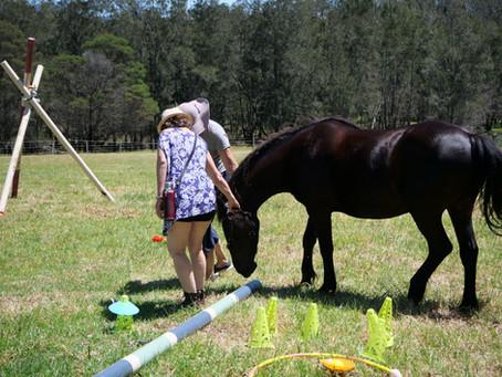 Horse Sense for Humans