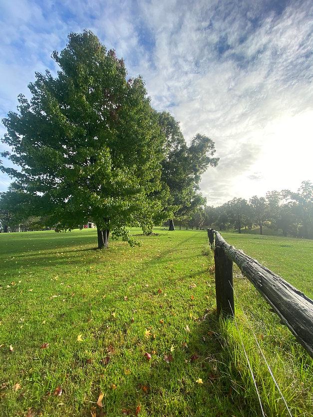 Greener-Pastures.jpg