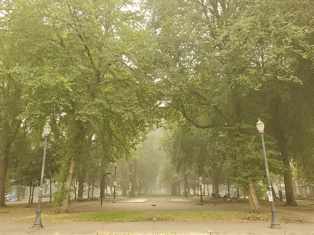 The North Park Blocks of Portland, eerily empty as visibility is unusually low due to smoke from forest fires.