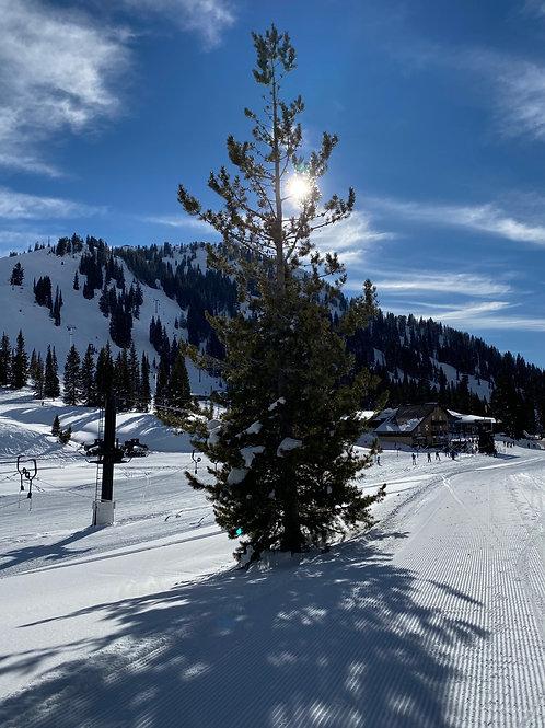 Alta Ski 2002139