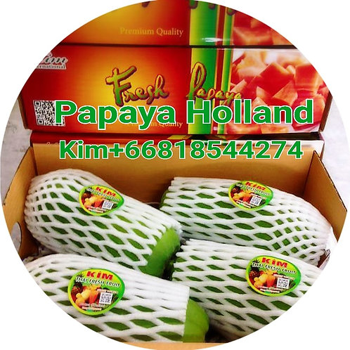 Papaya Holland-มะละกอพันธ์ฮอลแลนด์