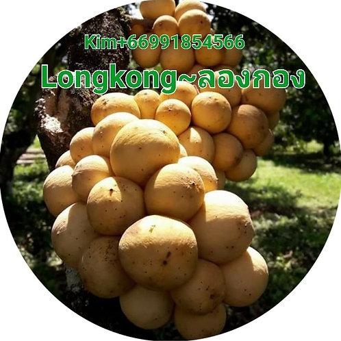 Longong-ลองกอง