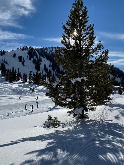 Alta Ski 2002135