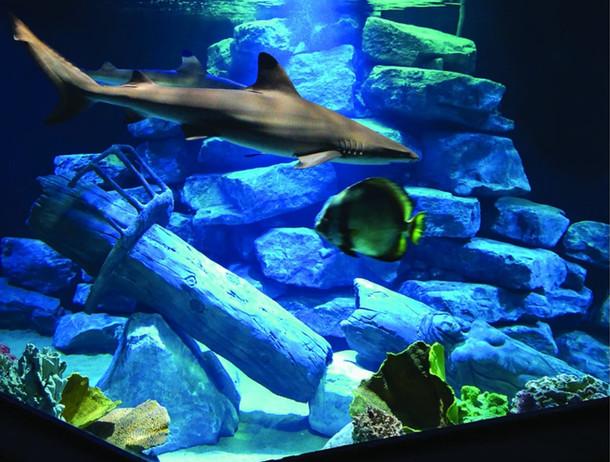 L'aquarium aux requins.jpg