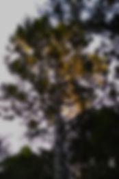 IMG_20190410_172412_edited.jpg