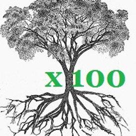 100 ALBERI