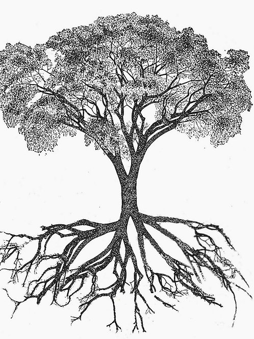 ONE TREE = 80 Kg CO2 in 20 years - 1.5 ton CO2 in 100 years