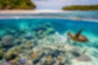 reef exctionction.jpg