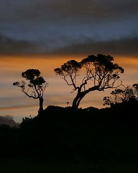 sunset in matapouri beach (8).JPG