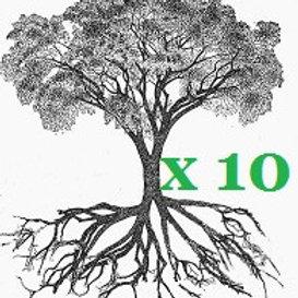 10 TREES mix of Manuka and Kanuka
