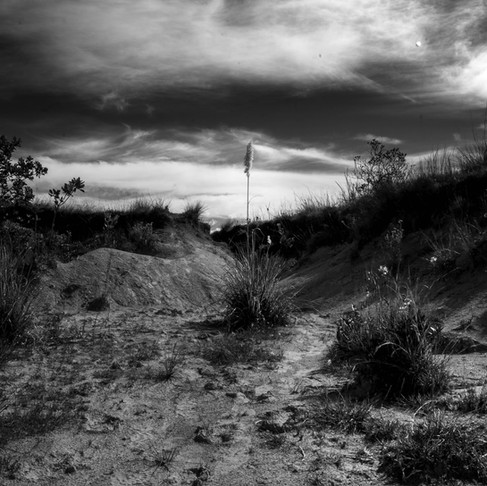 #TeRetoCuarentena: Cuarentena día 5 1/2