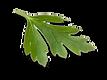 leaf_2x.png