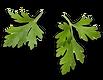Leaf_-1_2x.png