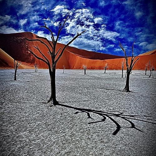 Heat Blistered Trees