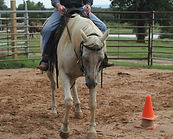 Start your training knowing there will be resistance. Larr French Horsemanship