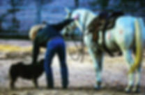 A day with my good buddies. 3L Horsemanship.com/Larry French/1on1 horsemanship coaching