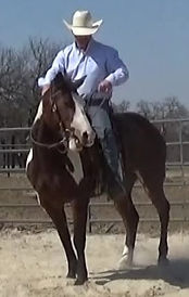 If you express fear, lack of knowledge and confidence, your horse will sense it and not trust you and will be resistant to your decisions. 3L Horsemanship